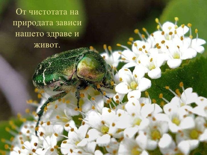 От чистотата на природата зависи нашето здраве и живот.