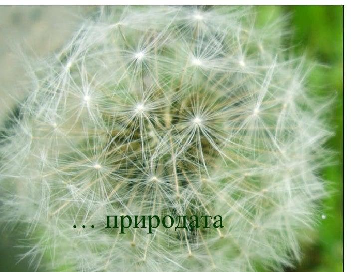 …  природата