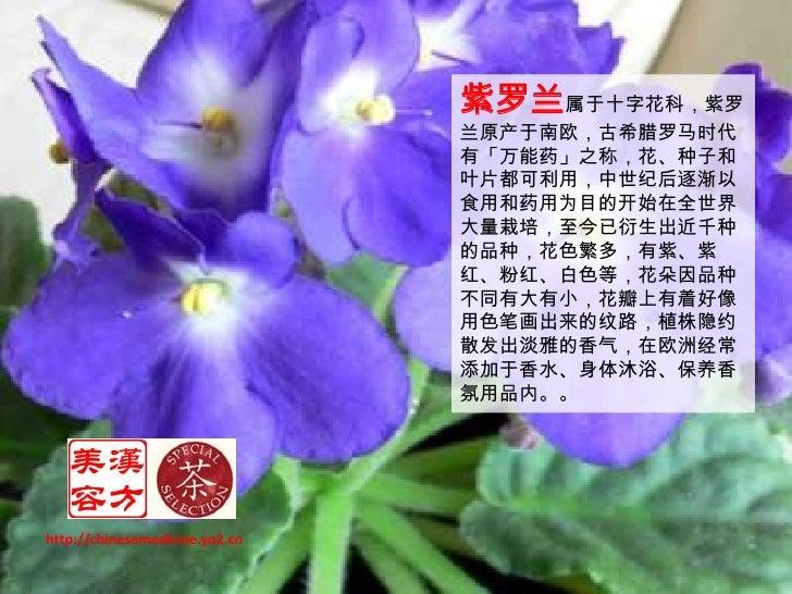 紫罗兰茶 Slide 2