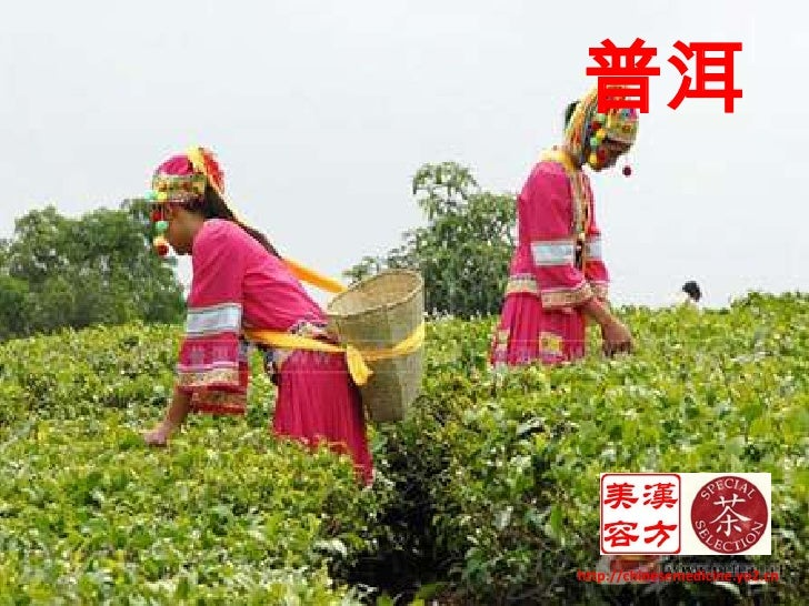 普洱<br />http://chinesemedicine.yo2.cn<br />