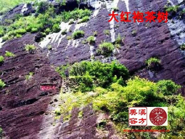 大红袍茶树<br />http://chinesemedicine.yo2.cn<br />