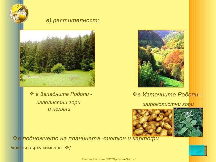 е) растителност ; <ul><li>в подножието на планината - </li></ul>иглолистни гори  и поляни широколистни гори <ul><li>в Запа...