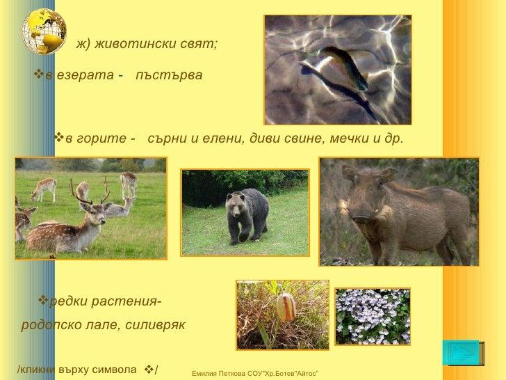 ж) животински свят; <ul><li>в горите - </li></ul><ul><li>в езерата  - </li></ul>пъстърва сърни и елени, диви свине, мечки ...