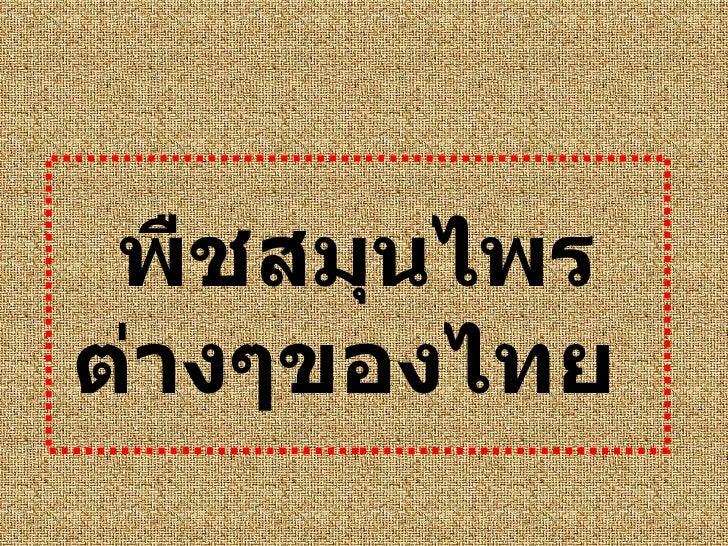 พืชสมุนไพรต่างๆของไทย