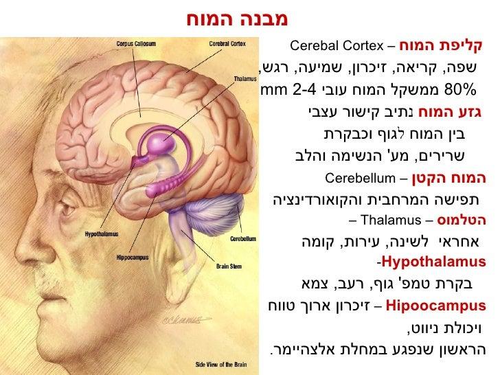 תחזוקת המוח (Hebrew)