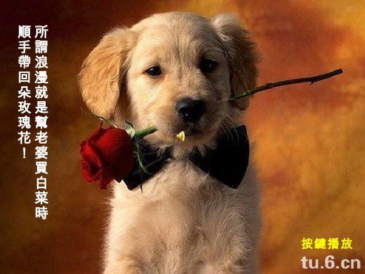 所謂浪漫就是幫老婆買白菜時 順手帶回朵玫瑰花! 按鍵播放