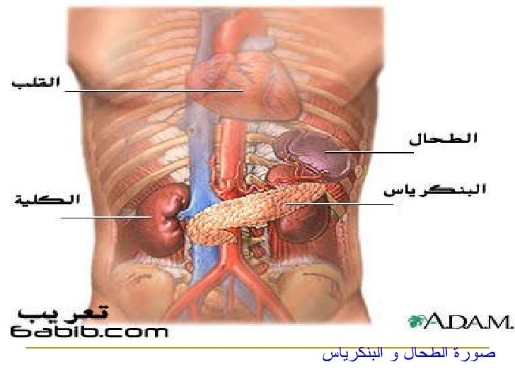 صورة جسم الإنسان ...