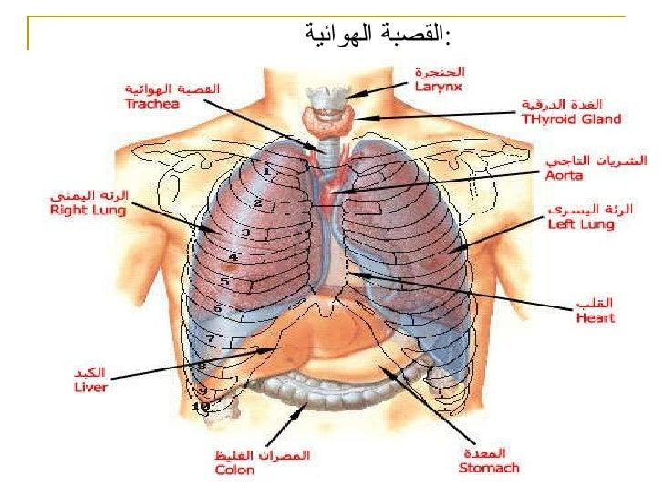 عضلات | العضلات | الجهاز العضلي Muscular System | تشريح جسم الانسان | طبيب