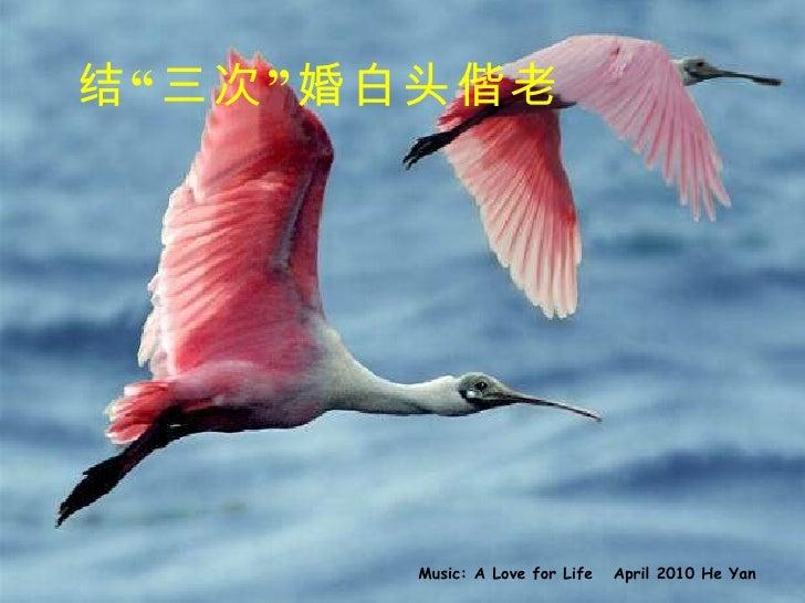 """结""""三次""""婚白头偕老 Music: A Love for Life  April 2010 He Yan"""