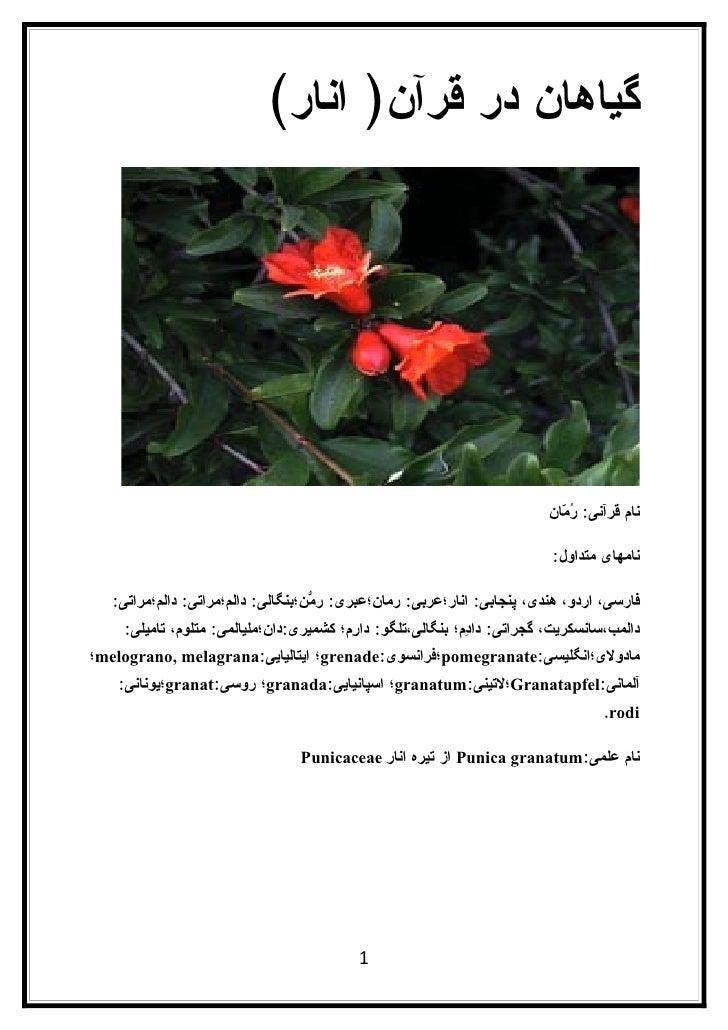 گیاهان در قرآن) انار(                                                                               نام قرآنی: ُ ّان  ...
