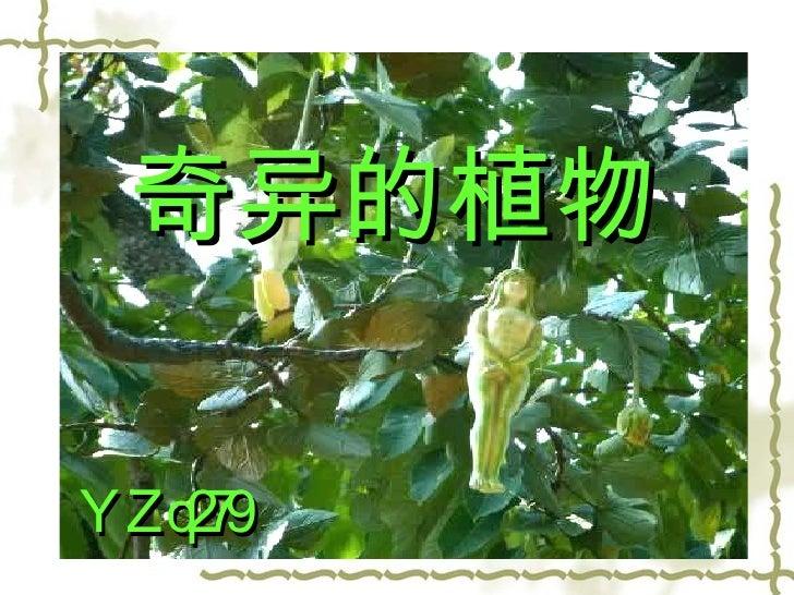 奇异的植物 YZq279