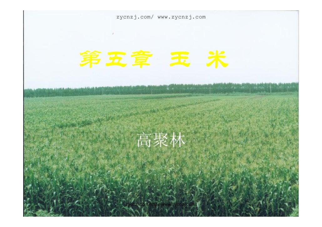 zycnzj.com/ www.zycnzj.com     第五章 玉 米          高聚林      zycnzj.com/http://www.zycnzj.com/