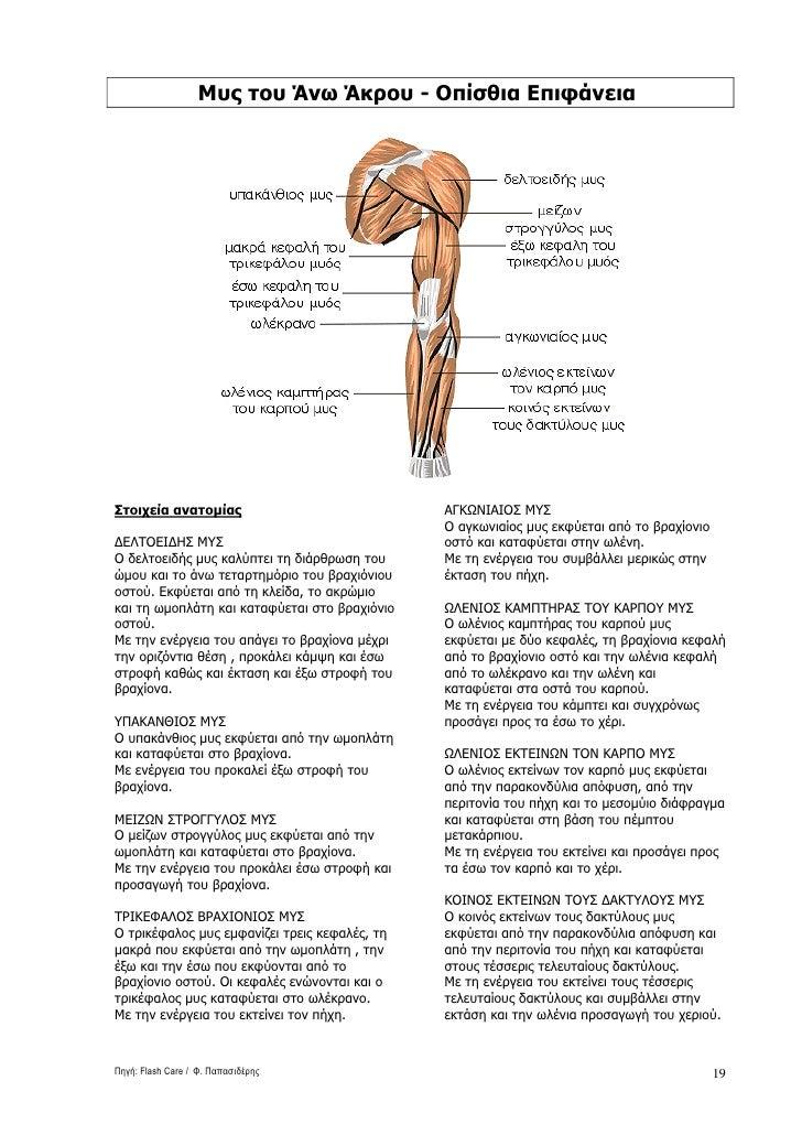 Μυς του Άνω Άκρου - Οπίσθια Επιφάνεια     Στοιχεία ανατοµίας                             ΑΓΚΩΝΙΑΙΟΣ ΜΥΣ                   ...