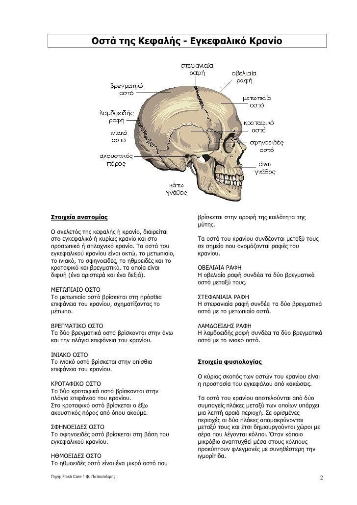 Οστά της Κεφαλής - Εγκεφαλικό Kρανίο     Στοιχεία ανατοµίας                              βρίσκεται στην οροφή της κοιλότητ...