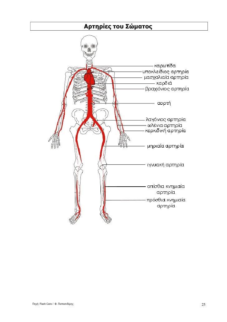 Αρτηρίες του Σώµατος     Πηγή: Flash Care / Φ. Παπασιδέρης                          25