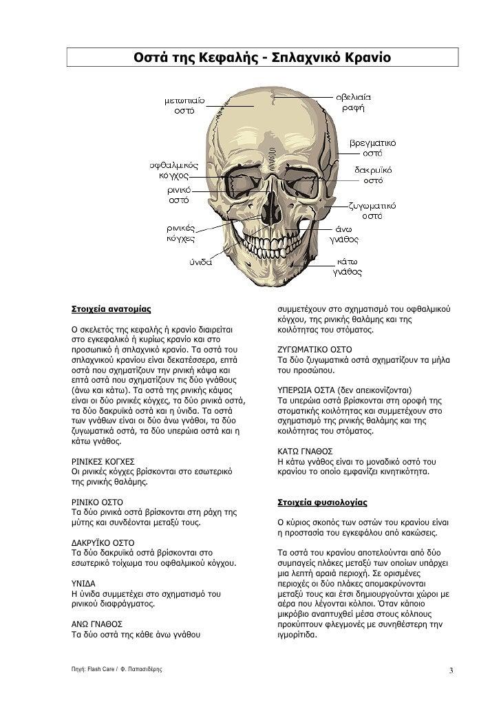 Οστά της Κεφαλής - Σπλαχνικό Κρανίο     Στοιχεία ανατοµίας                                 συµµετέχουν στο σχηµατισµό του ...