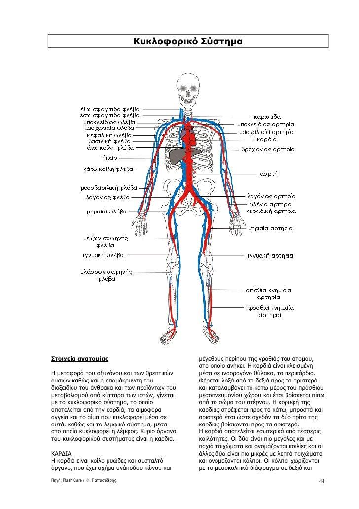 ανατομια ανθρωπινου-σωματοσ