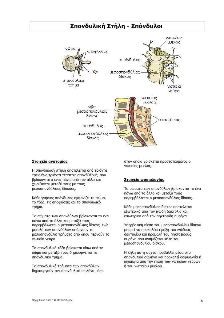 Σπονδυλική Στήλη - Σπόνδυλοι     Στοιχεία ανατοµίας                             στον οποίο βρίσκεται προστατευµένος ο     ...