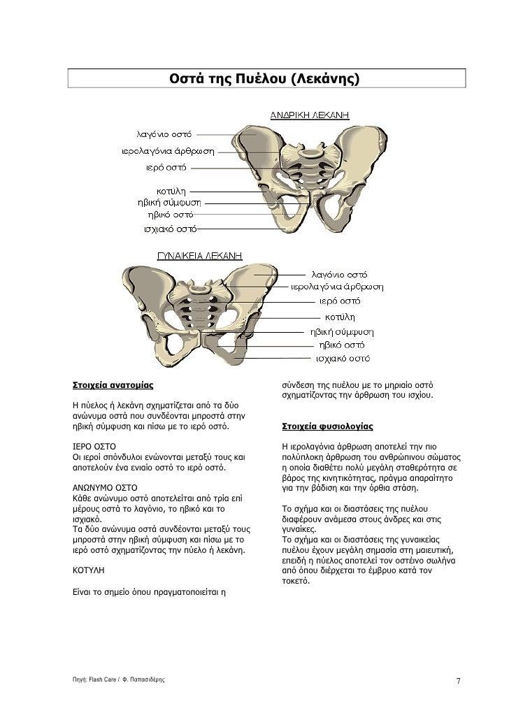 Οστά της Πυέλου (Λεκάνης)     Στοιχεία ανατοµίας                                σύνδεση της πυέλου µε το µηριαίο οστό     ...