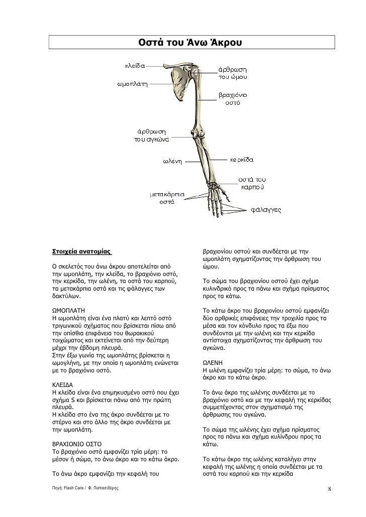 Οστά του Άνω Άκρου     Στοιχεία ανατοµίας                              βραχιονίου οστού και συνδέεται µε την              ...