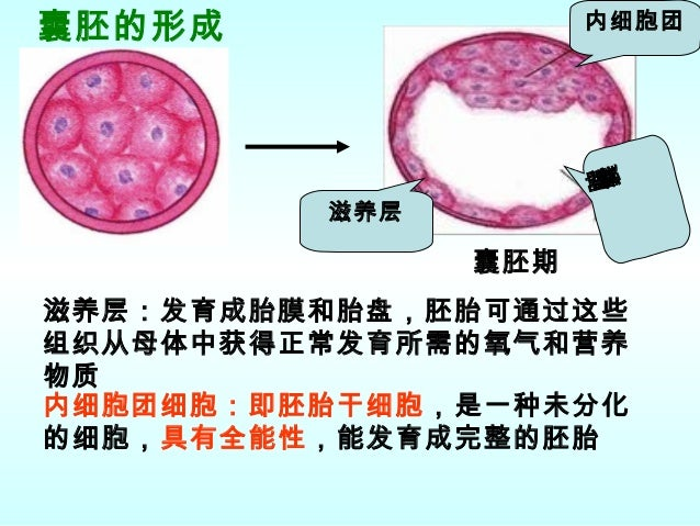 Embryonic stem cells and tissue engineering: delivering stem cells to the clinic