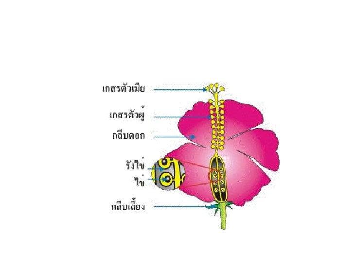 ส่วนประกอบของดอกไม้<br />