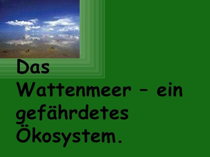 Das  Wattenmeer – ein gefährdetes Ökosystem.