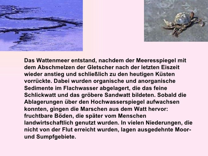 Das Wattenmeer entstand, nachdem der Meeresspiegel mit dem Abschmelzen der Gletscher nach der letzten Eiszeit wieder ansti...