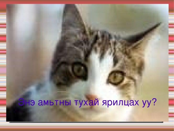 Муур Энэ амьтны тухай ярилцах уу?