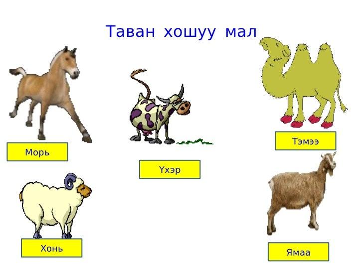 Таван хошуу мал                           ТэмээМорь              Үхэр  Хонь                     Ямаа