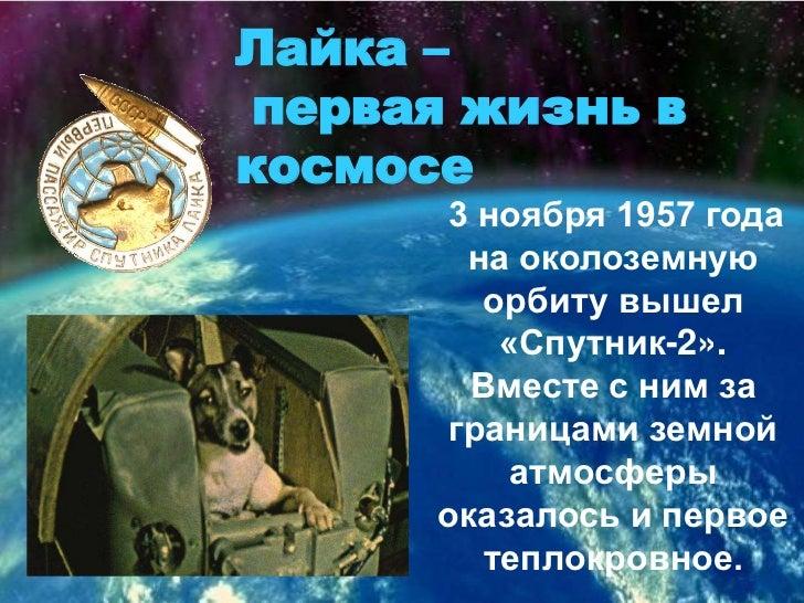 Лайка – первая жизнь в     космосе<br />3 ноября 1957 года на околоземную орбиту вышел «Спутник-2». Вместе с ним за границ...