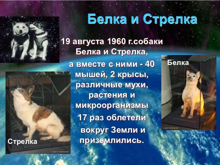 Белка и Стрелка<br />19 августа 1960 г.собаки Белка и Стрелка, <br />а вместе с ними - 40 мышей, 2 крысы, различные мухи, ...
