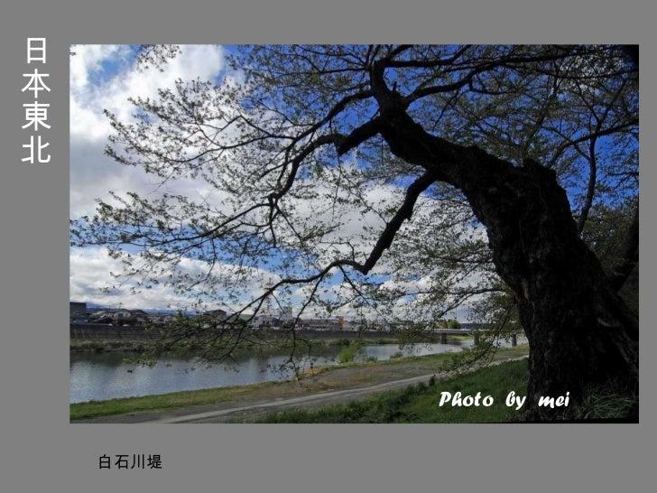 日本東北 白石川堤 Photo  by  mei