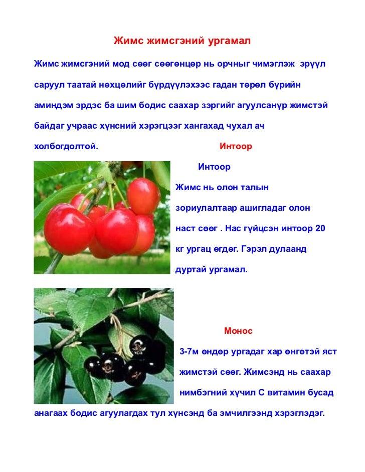 Жимс жимсгэний ургамалЖимс жимсгэний мод сөөг сөөгөнцөр нь орчныг чимэглэж эрүүлсаруул таатай нөхцөлийг бүрдүүлэхээс гадан...