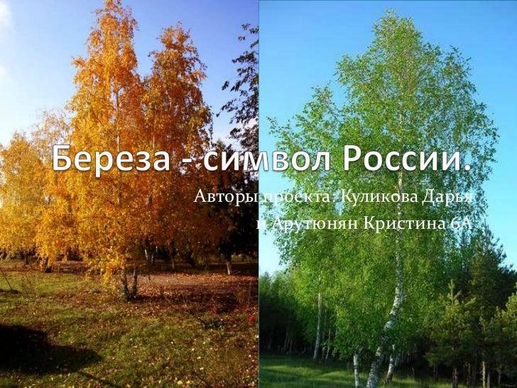 фото березы россии