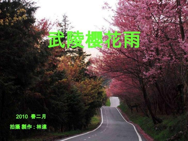 武陵櫻花雨<br />2010  春二月<br />拍攝 製作 : 林達<br />