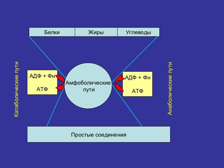 download Molecular Bioenergetics and Macromolecular Biochemistry: Meyerhof Symposium Heidelberg, July 5–8,