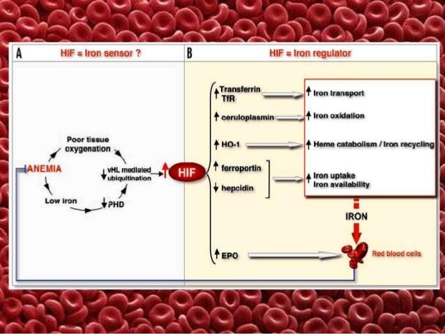 ГЕНЕТИЧНІ ДЕФЕКТИ БІЛКІВ ЦИТОСКЕЛЕТУ (spectrin, ankyrin, Band 3, Protein 4.2) - МОЛЕКУЛЯРНА ОСНОВА СПАДКОВОГО МІКРОСФЕРОЦИ...