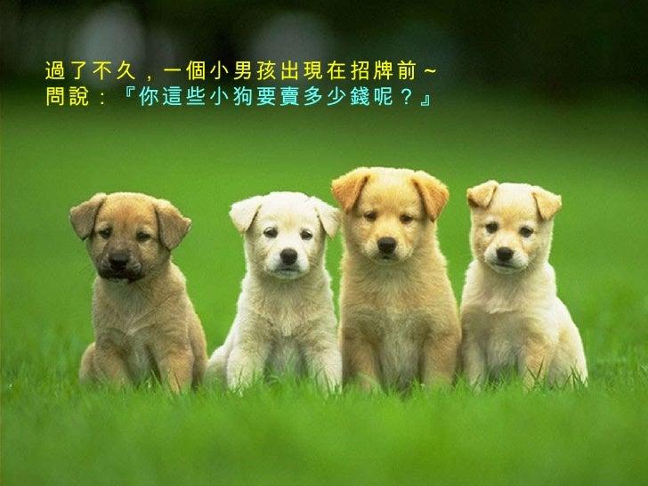 小狗出售  Slide 3