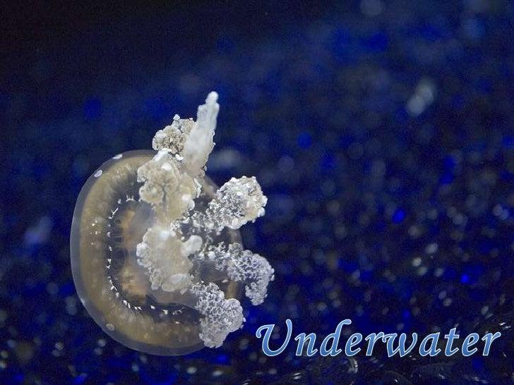 Underwater<br />