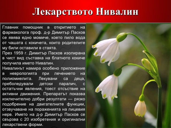 Лекарството  Нивалин Главник помощник в откритието на фармаколога проф. д-р Димитър Пасков се явява едно момиче, което пил...