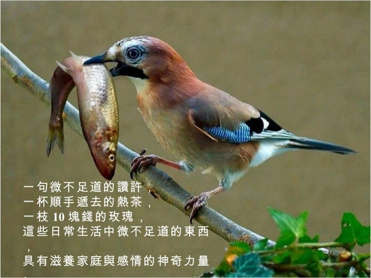 別讓那隻鳥飛了 Slide 2