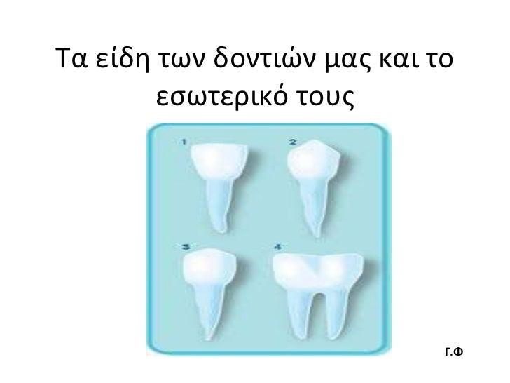 Τα είδη των δοντιών μας και το εσωτερικό τους Γ.Φ