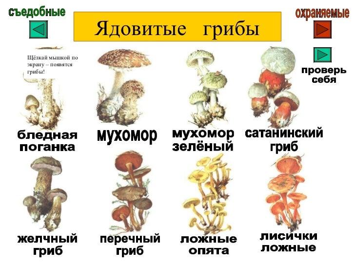фото съедобные и ядовитые грибы