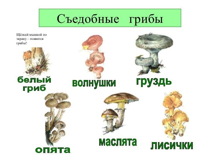 шампиньон шляпочный гриб