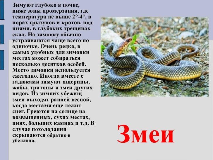 Доклад на тему t зимуют животные картинки