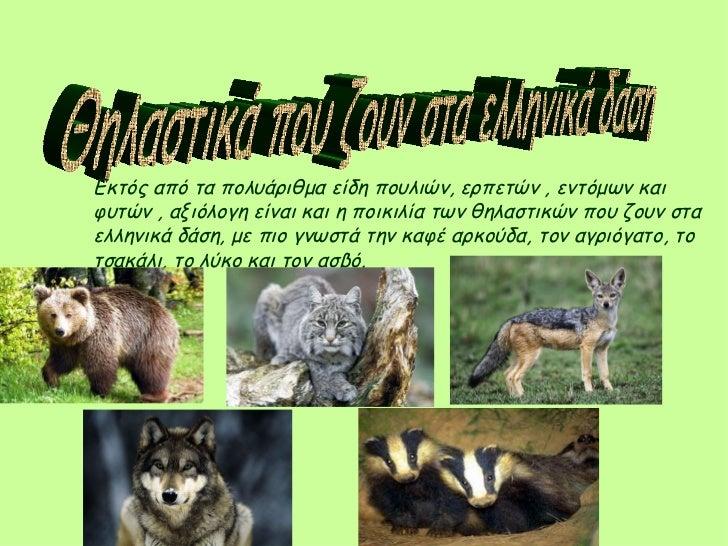 Θηλαστικά που ζουν στα ελληνικά δάση  Εκτός από τα πολυάριθμα είδη πουλιών, ερπετών , εντόμων και φυτών , αξιόλογη είναι κ...