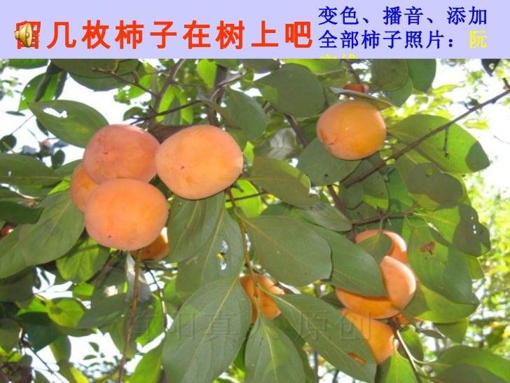 留几枚柿子在树上吧 变色、播音、添加全部柿子照片: 阮宜维