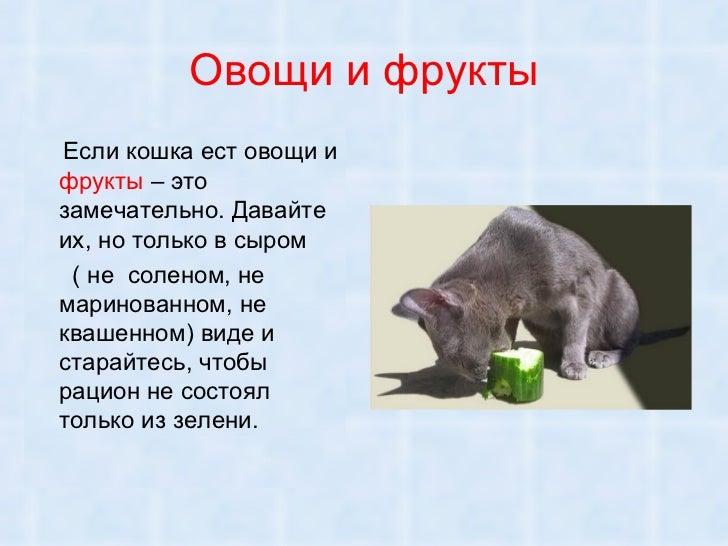 Кот ест овощи и фрукты