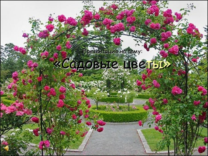 Презентация на тему:«Садовые цветы»